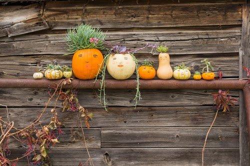 diy-pumpkin-succulent-planters-2