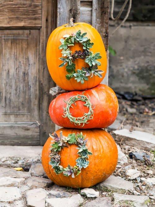 diy-pumpkin-succulents-planter