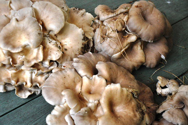 """Sauteed Oyster Mushrooms"""
