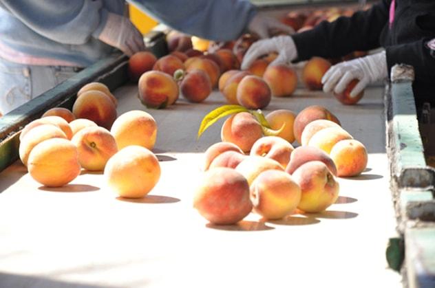 Aint that a Peach
