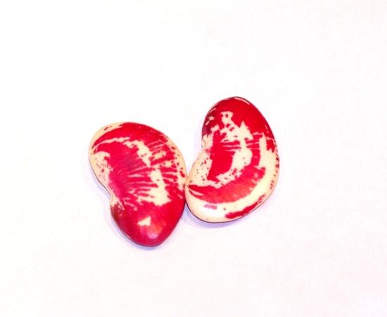 Cranberry Beans 004v2