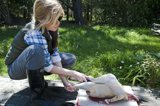"""How to Field Dress and Butcher a Turkey"""" - The Official Site of ..."""