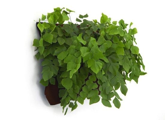 wallyone-seamless_planted-brown
