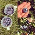 Blueberry Pinot Noir Jam