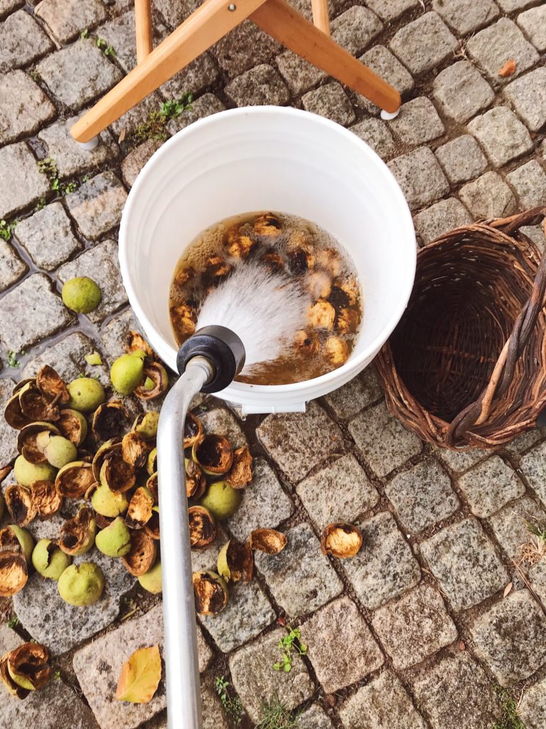 How-to-clean-black-walnuts-14