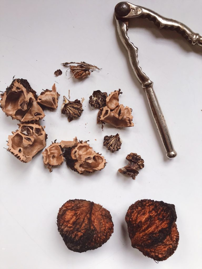 How-to-clean-black-walnuts-9