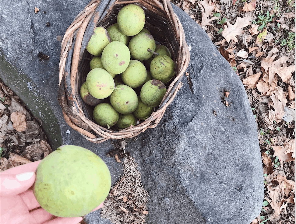 How to Clean Black Walnuts