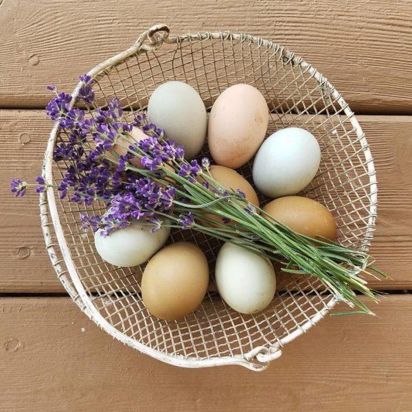 Coffee with: Lisa Steele of Fresh Eggs Daily