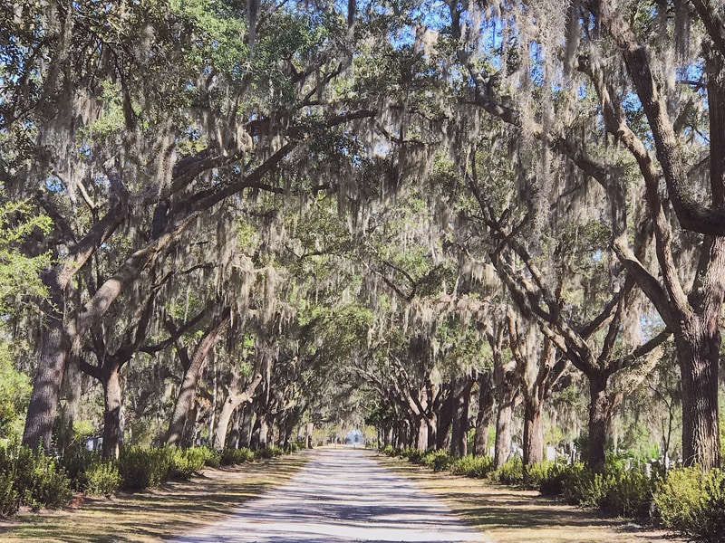 A Guide to Mystical Savannah