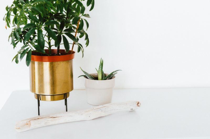 How to Keep Your Houseplants Thriving in the Winter Months