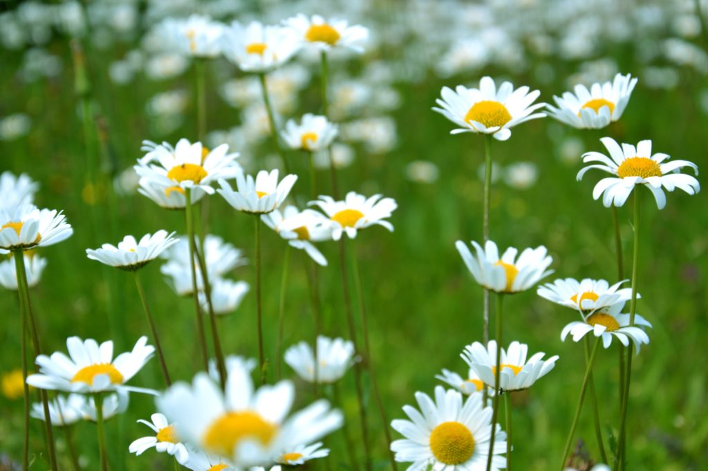 5 Things To Do to Get Your Yard Ready For Spring