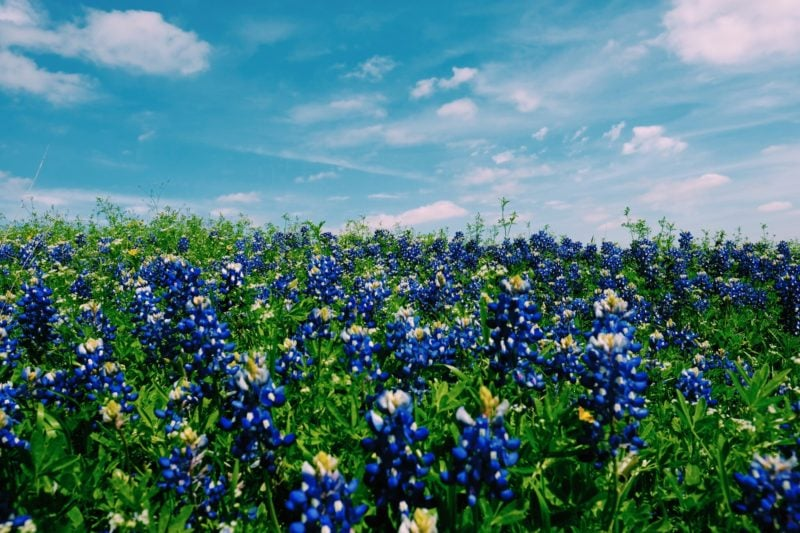 Spring Break Destinations You Have Not Thought of Yet- Austin, TX