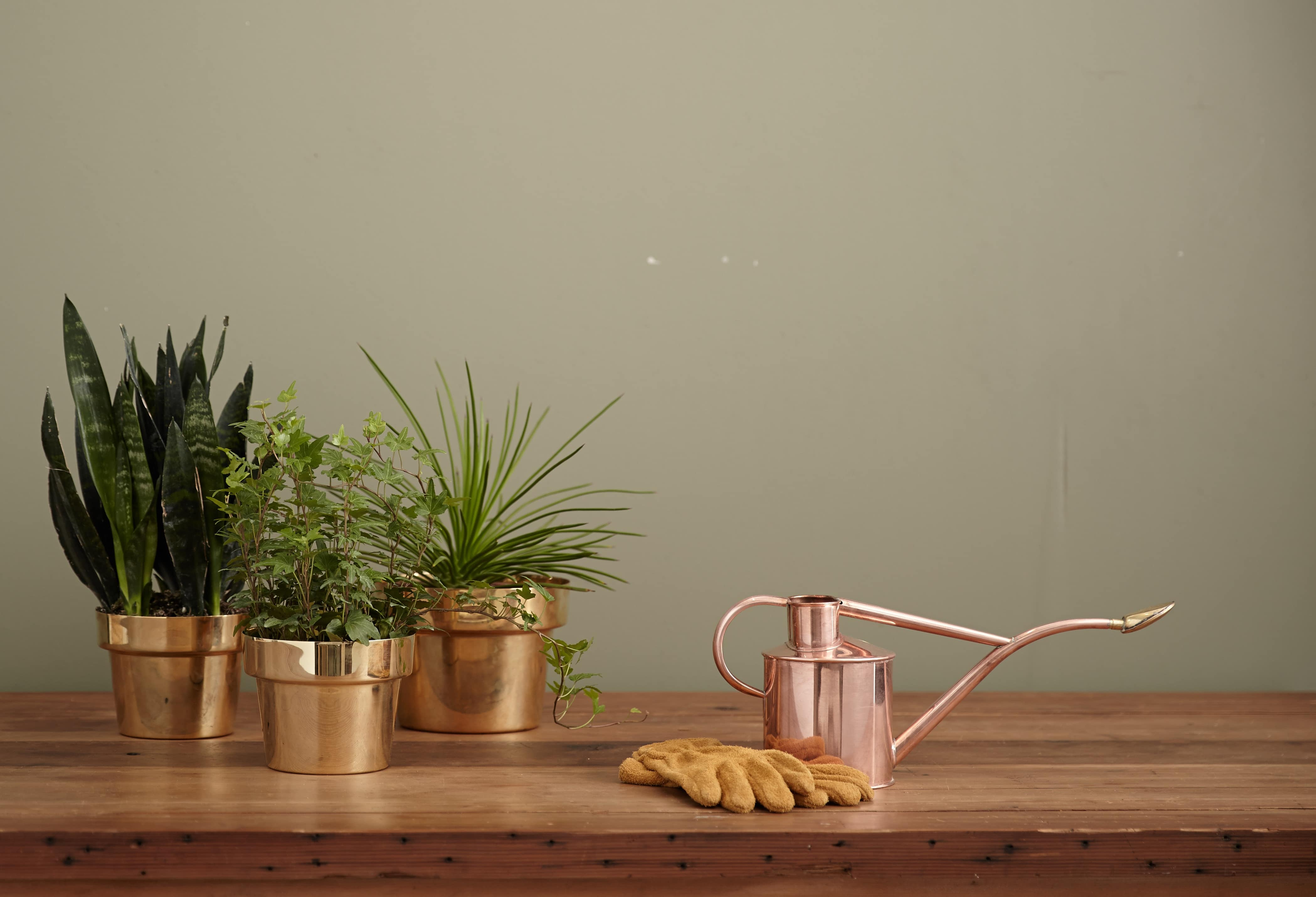 The Art of Watering Plants