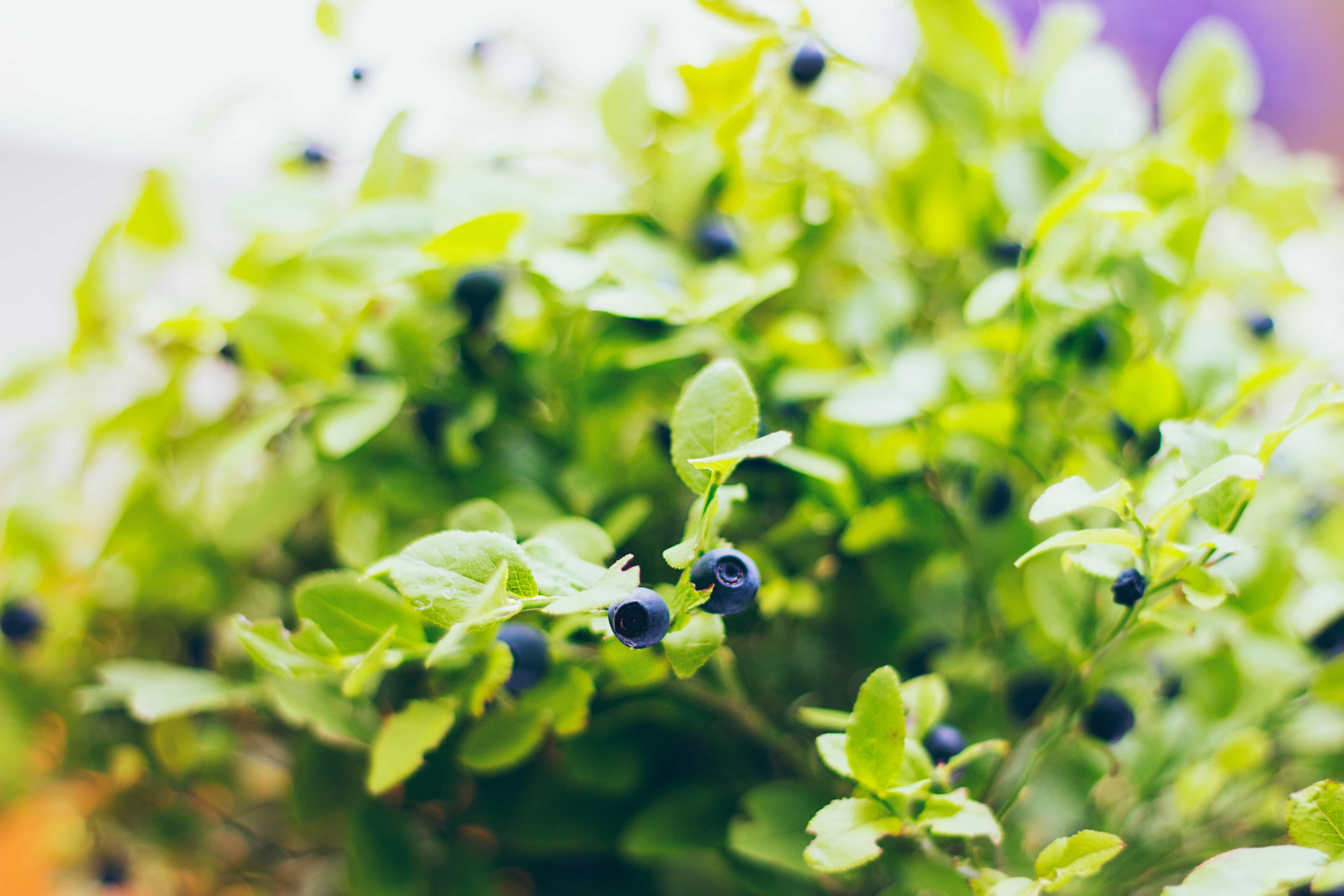 Common Outdoor Planting Hurdles and How to Overcome Them