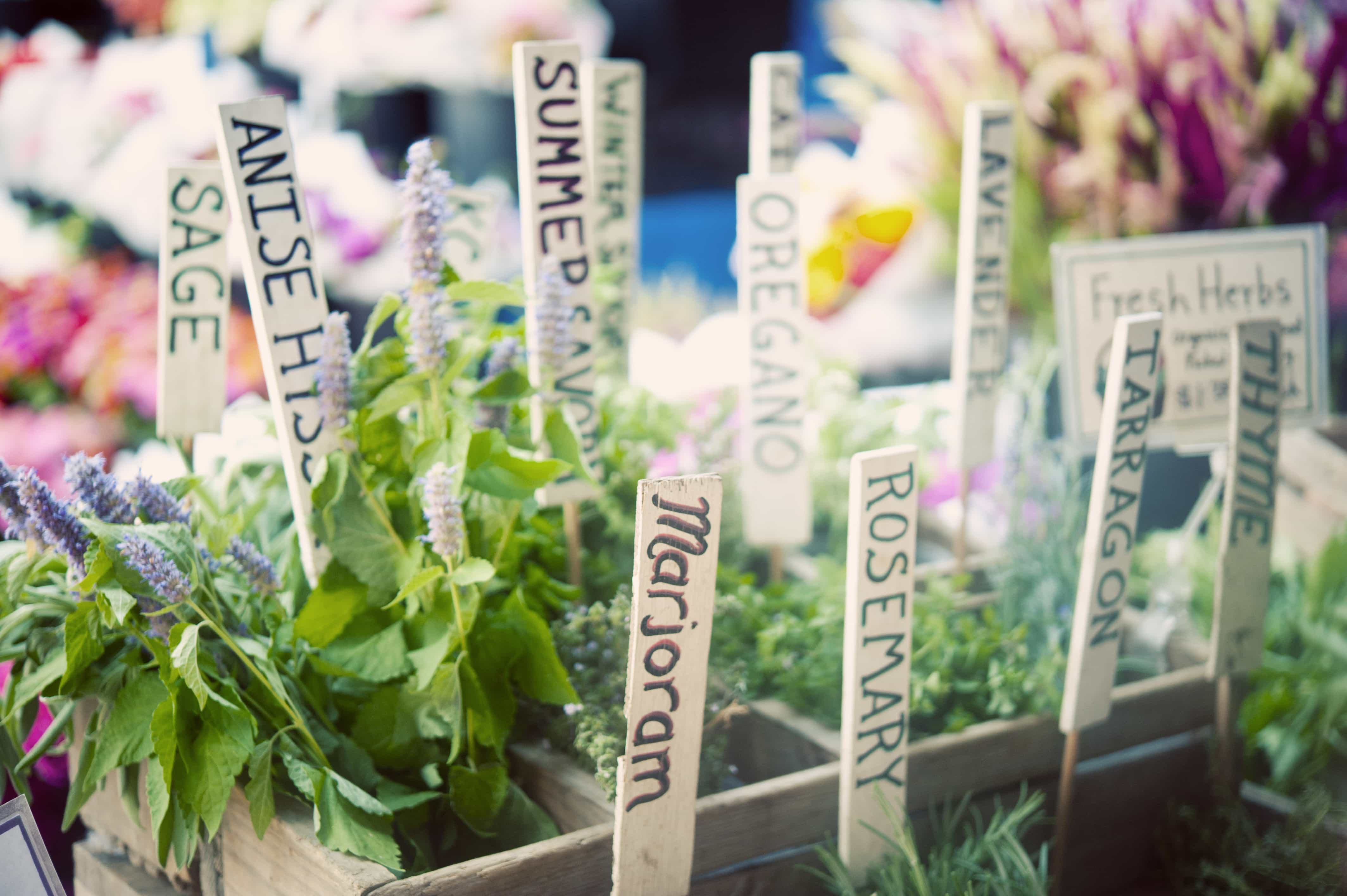 How to Preserve Your Own Herbs