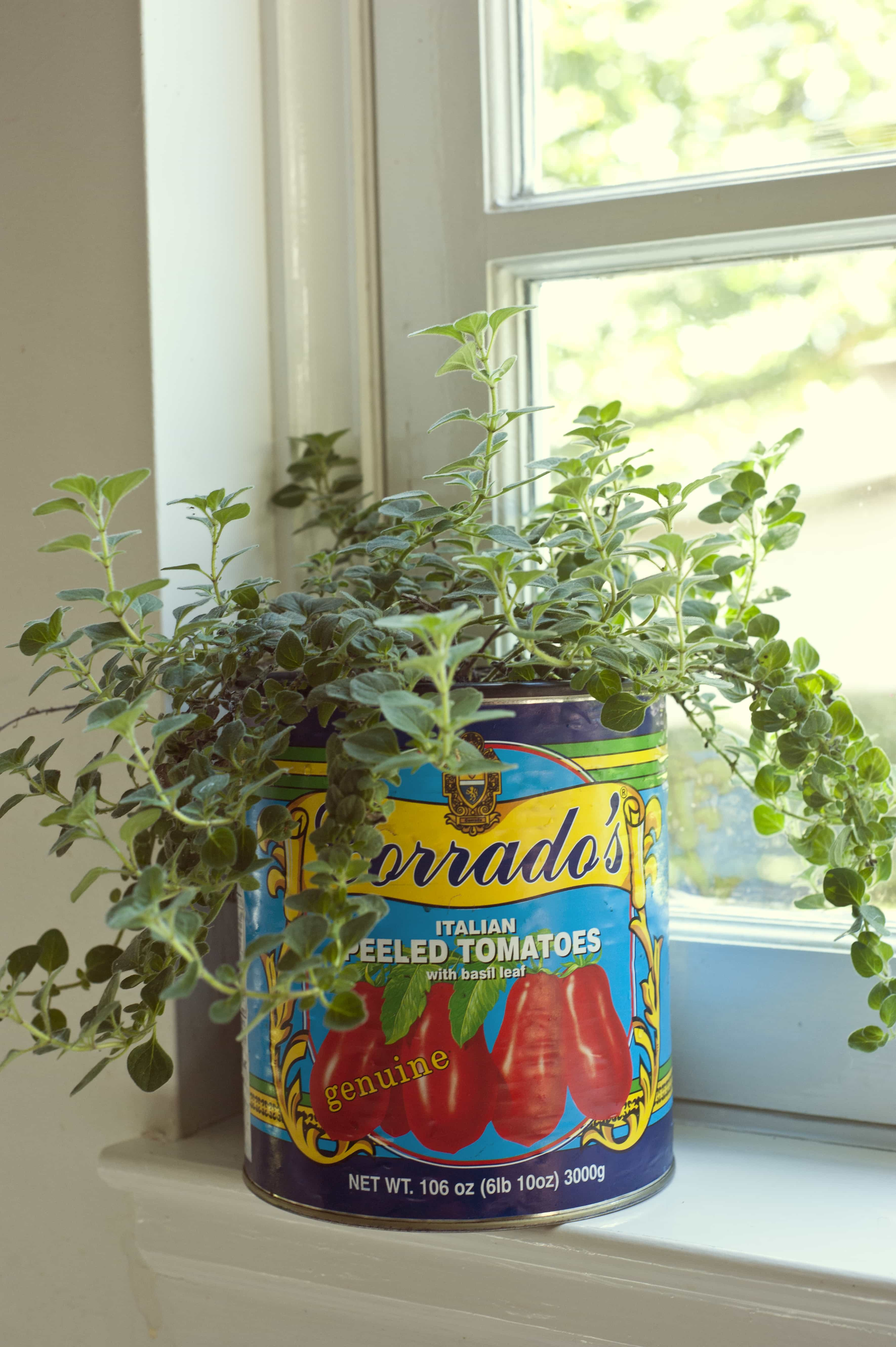 Fabulous and Unlikely Growing Containers