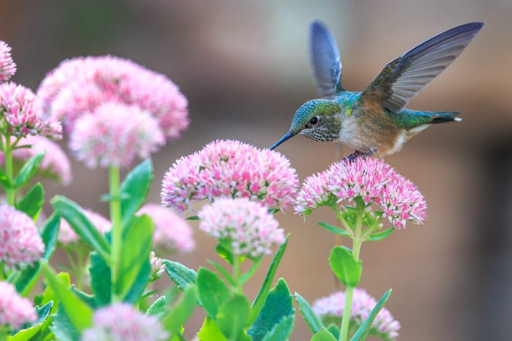 How to Attract Butterflies Honeybees and Hummingbirds to Your Windowsill