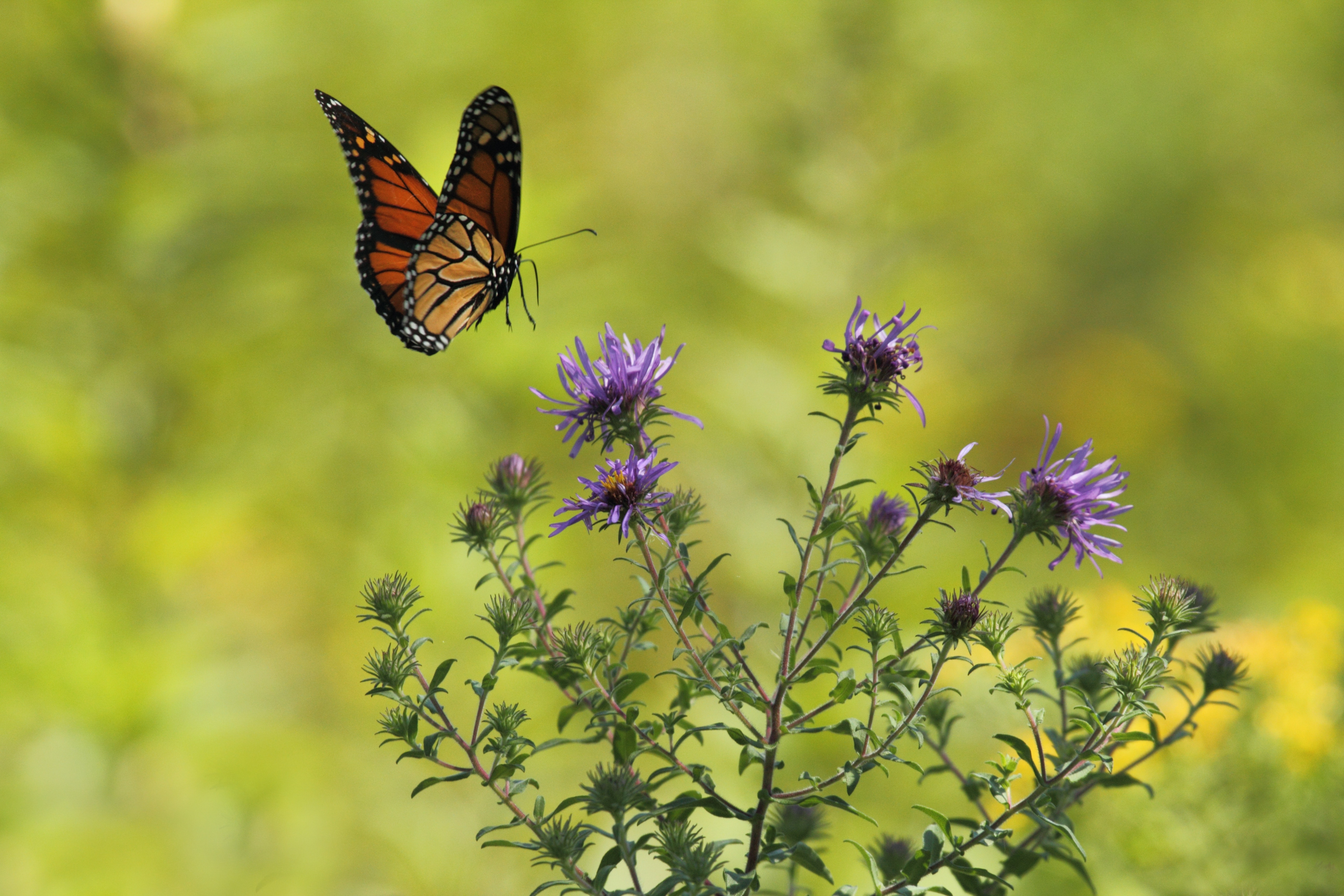 How-to-Attract-Butterflies-Honeybees-and-Hummingbirds-to-Your-Windowsill