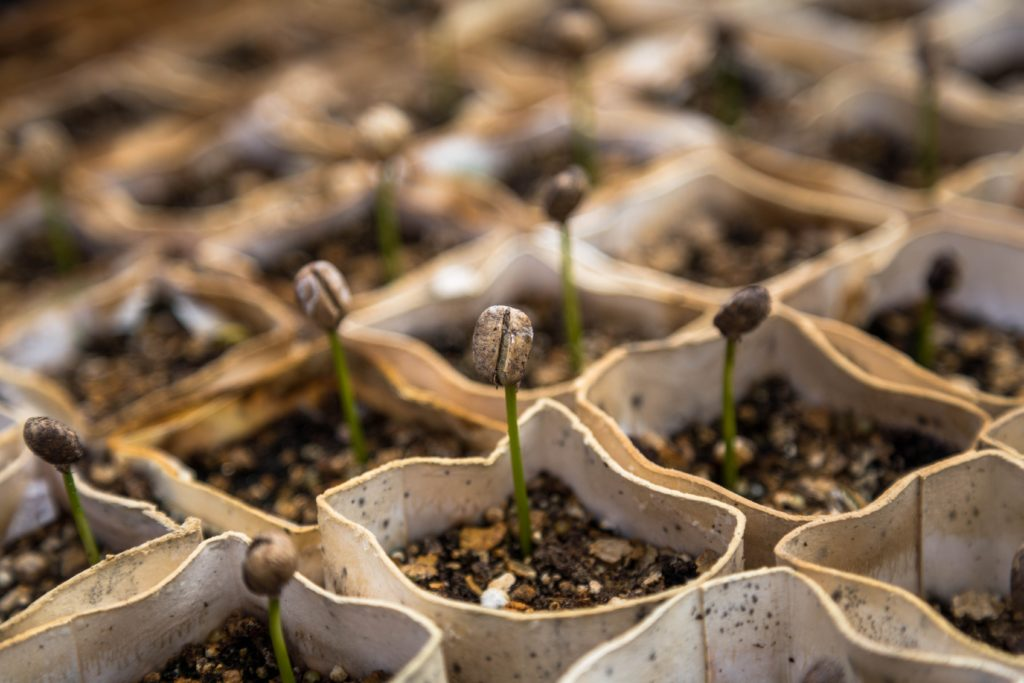 Steps to Growing Seedlings