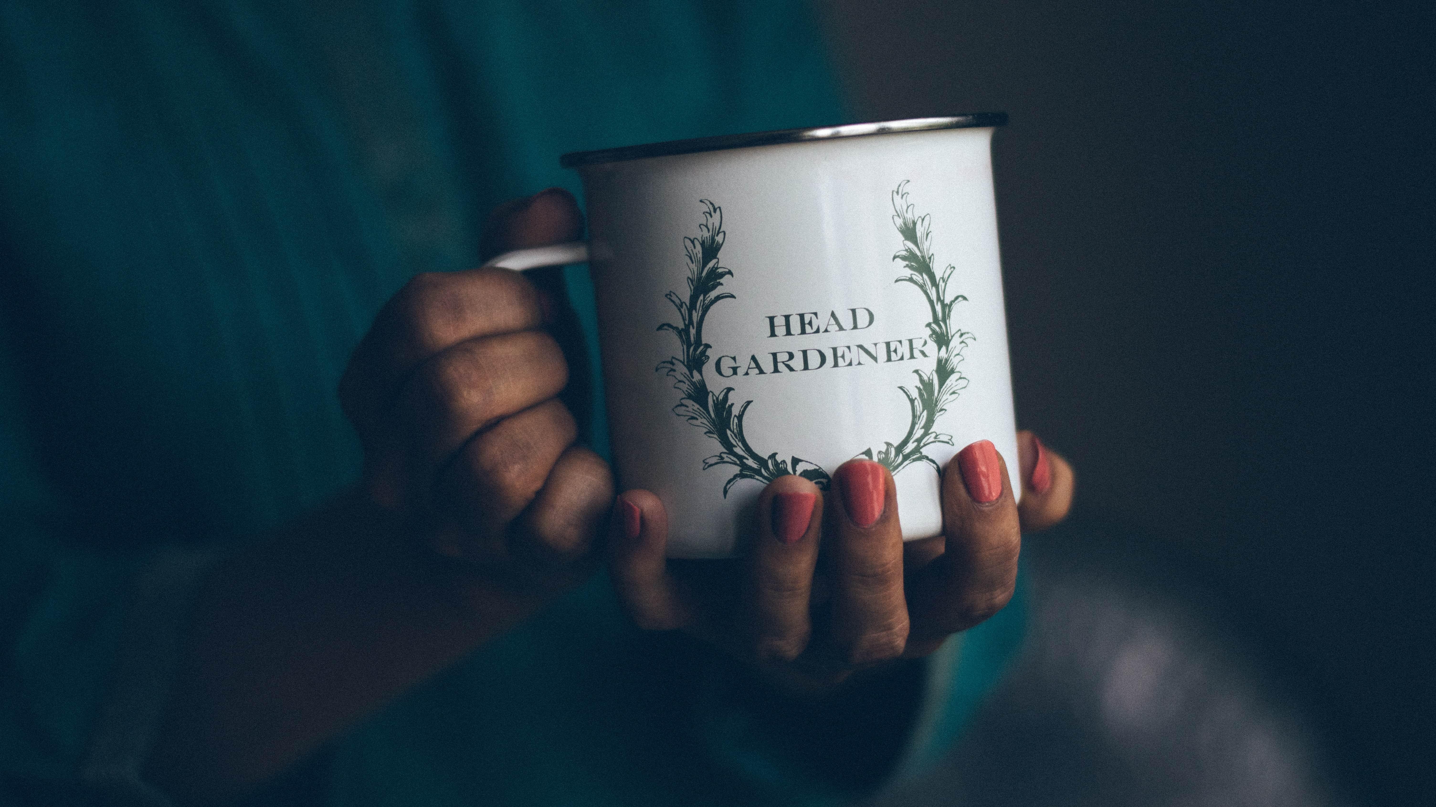 Steps to Growing Seedlings