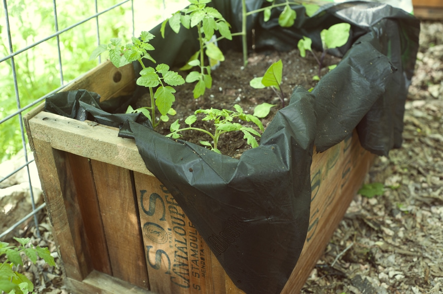 8 Tips for Outdoor Container or Roof Gardening