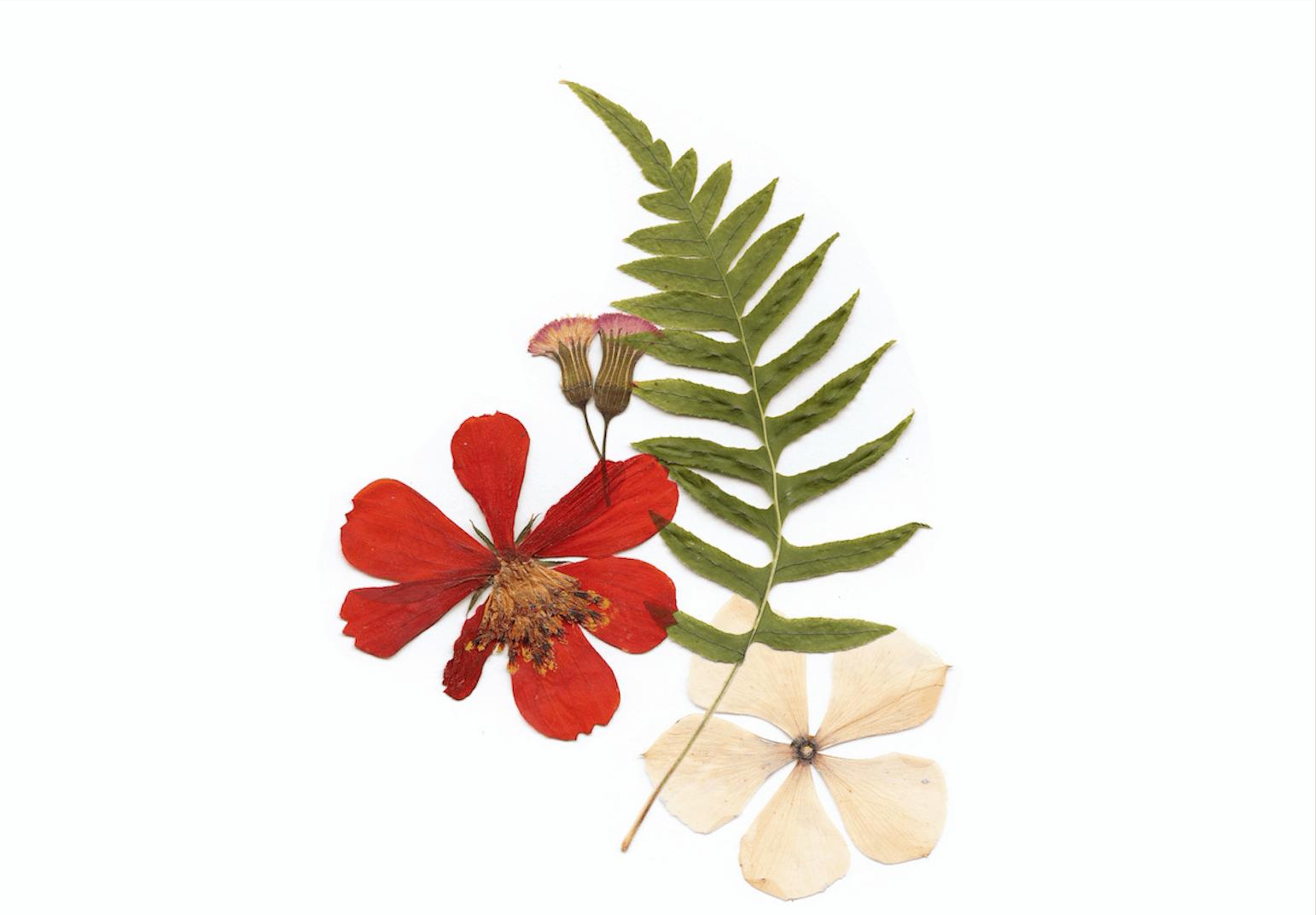 How To Make A Flower Press And Dry Flowers Georgiapellegrini Com