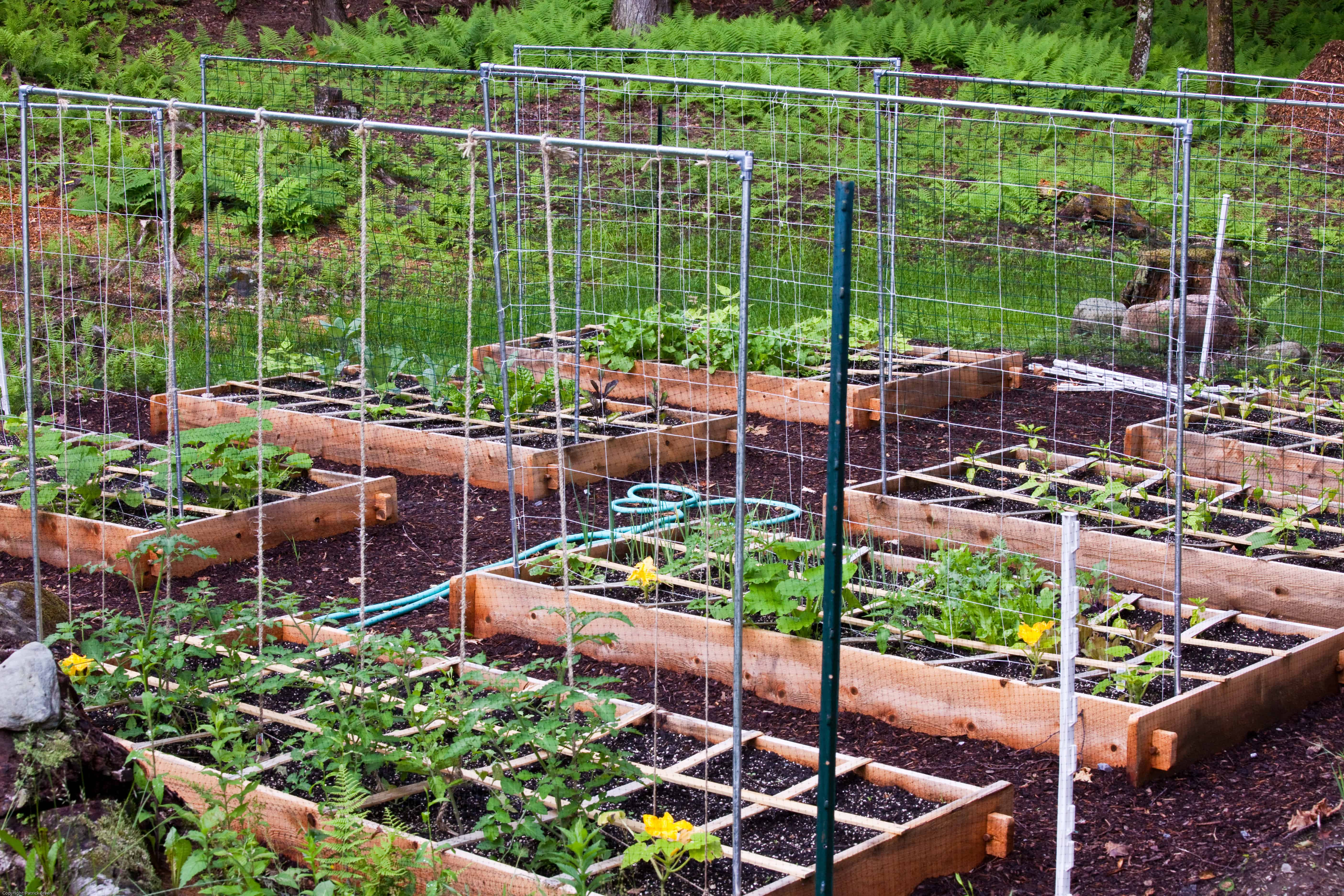 How to trellis your raised bed garden