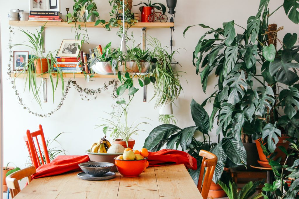 How to Be a Fruit Bowl Gardener
