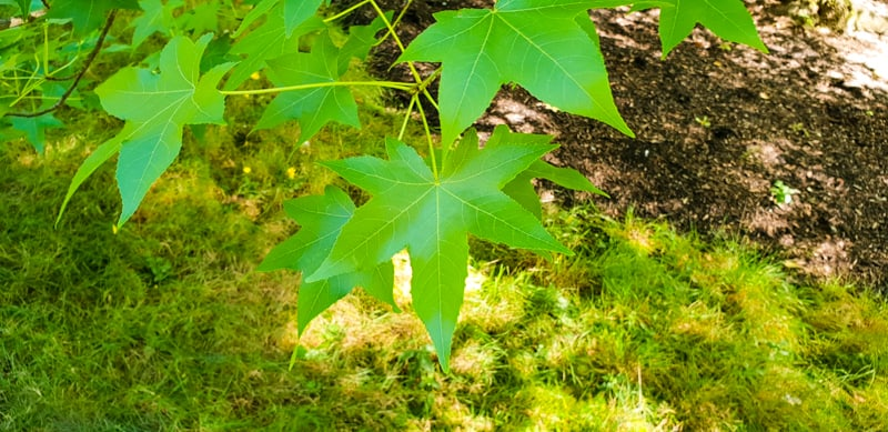 How-to-Identify-Trees-by-Their-Leaves
