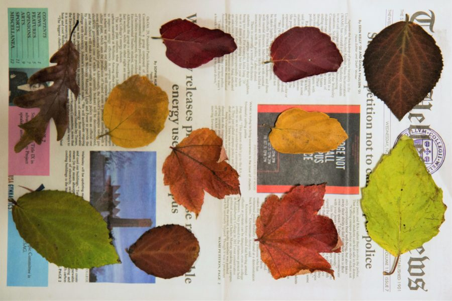 How to Make Gift Tags Out of Autumn Leaves 2