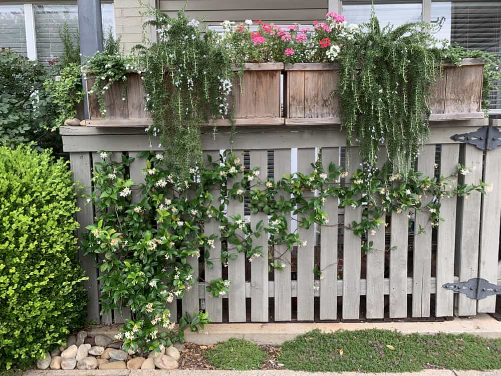Tips for Beautiful Flower Boxes All Year Round