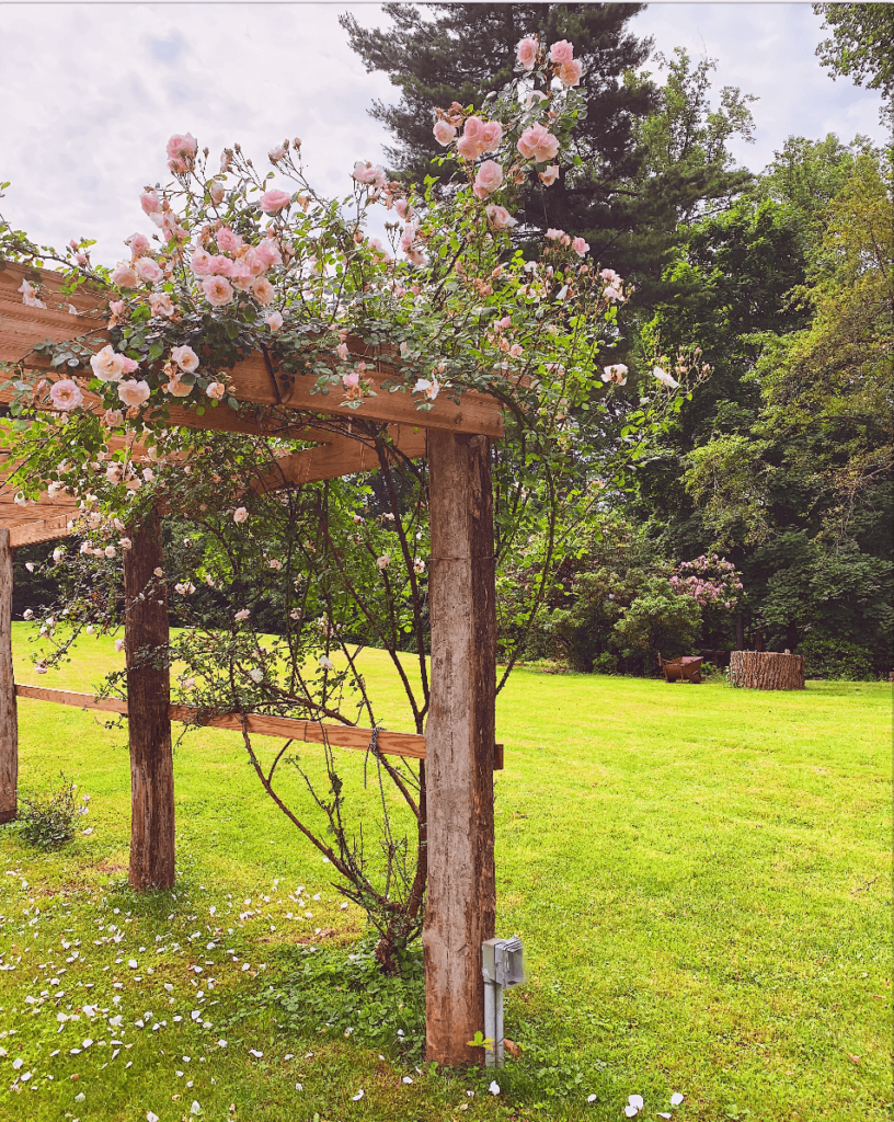 A Tour of Tulipwood Gardens