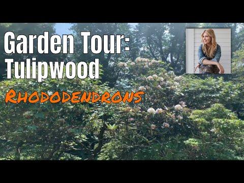 Tulipwood Rhododendron Tour