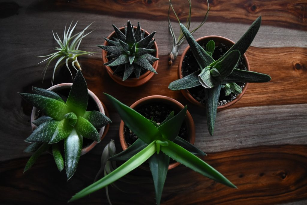 How to Keep Plants Alive During Vacation